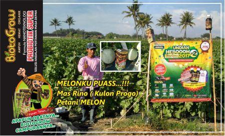 biotogrow | busuk batang tuntas..bobot melon meningkat