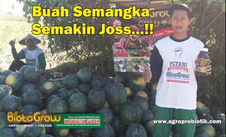 semangka semakin jooss