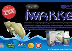 Iwakke | Probiotik Super untuk perikanan