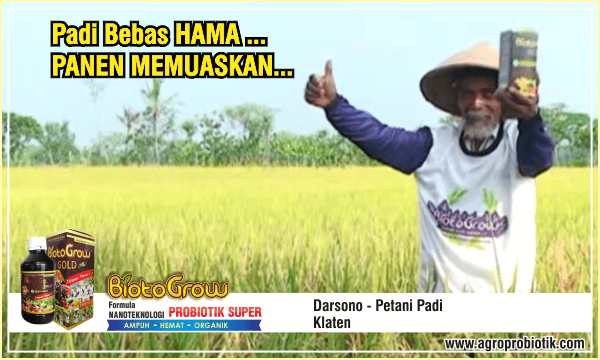 pupuk tanaman padi-bebas hama panen puas