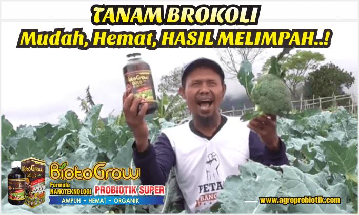 pupuk organik cair untuk brokoli