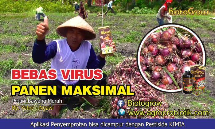 biotogrow petani bawang merah