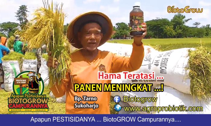 hama tanaman padi teratasi panen meningkat 1