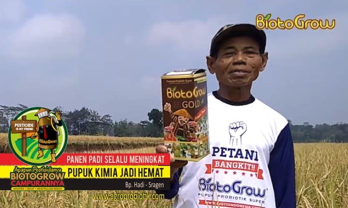 panen padi meningkat terus kimia hemat