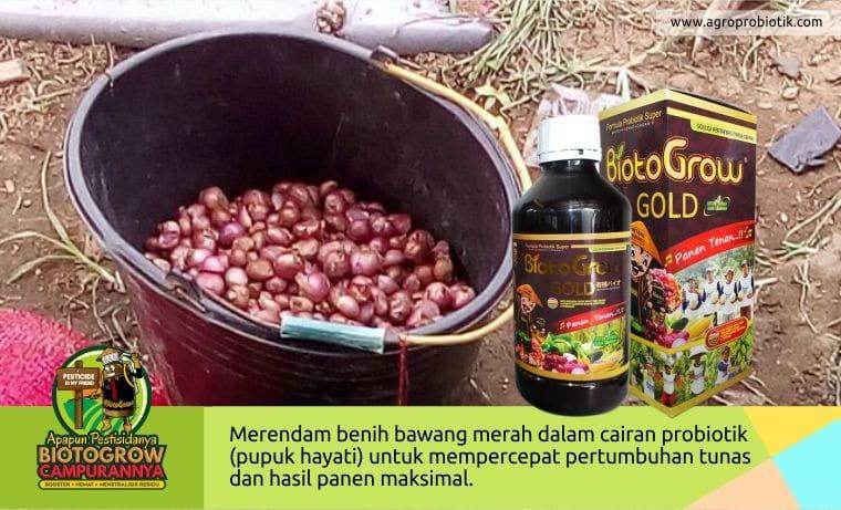 biogotogrow pupuk untuk tanaman bawang