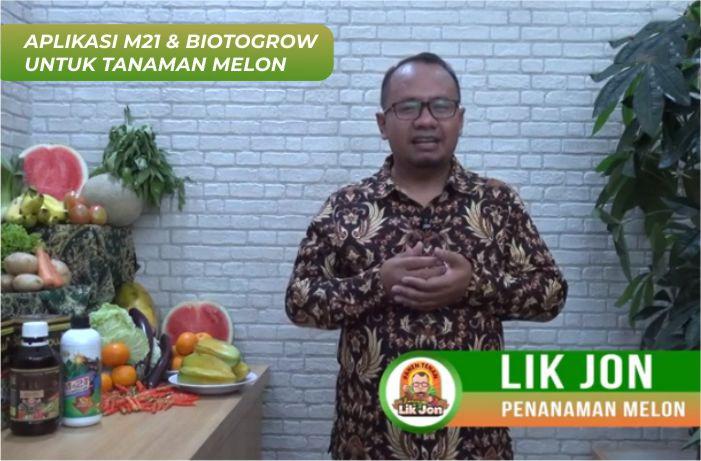 Menanam melon agar pertumbuhan tanaman melonbagus, maksimal, tahan hama, dan tahan penyakit. Kuncinya bisa menggunakan Decomposer M21 dan BiotoGrow.