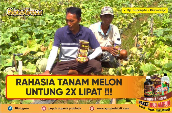 Rahasia Tanam Melon Untung 2x Lipat!!