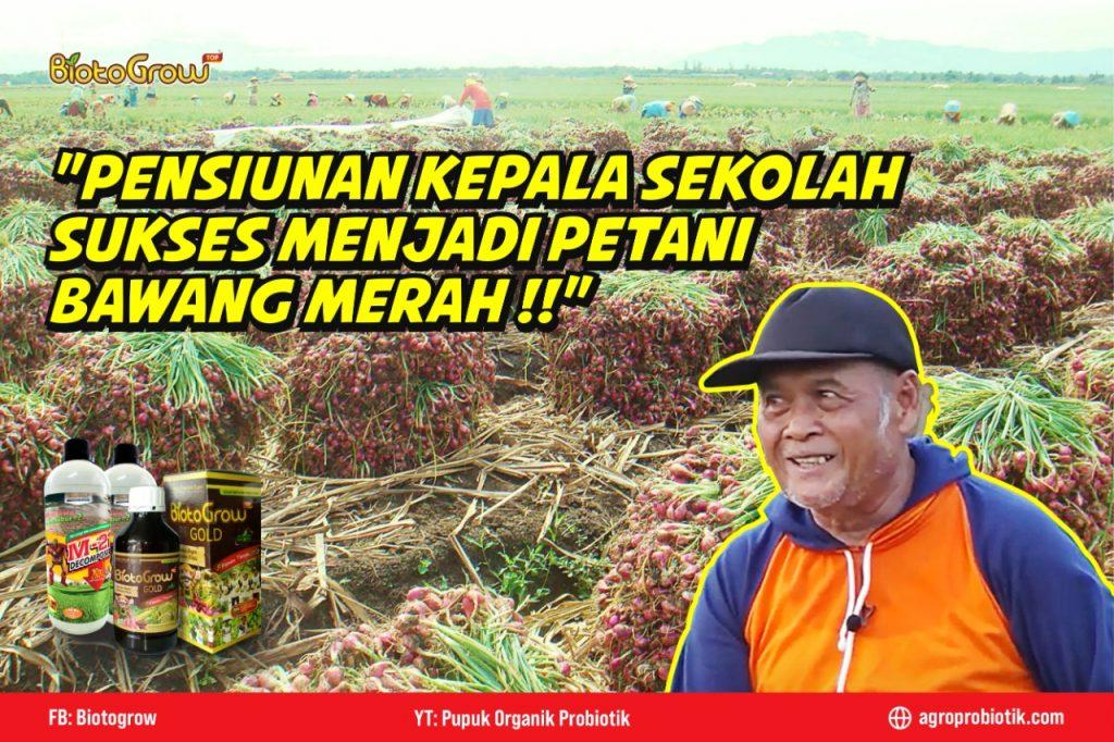 Pensiunan Kepala Sekolah Sukses Menjadi Petani Bawang Merah !!